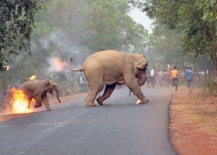 印度小象遭暴民火球掷中一刻 获《Sanctuary》杂志举办的摄影比赛冠军