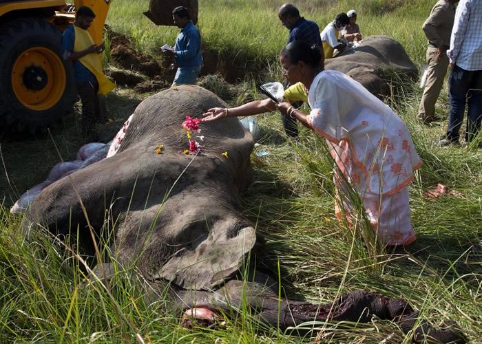 民众向大象尸体献花。