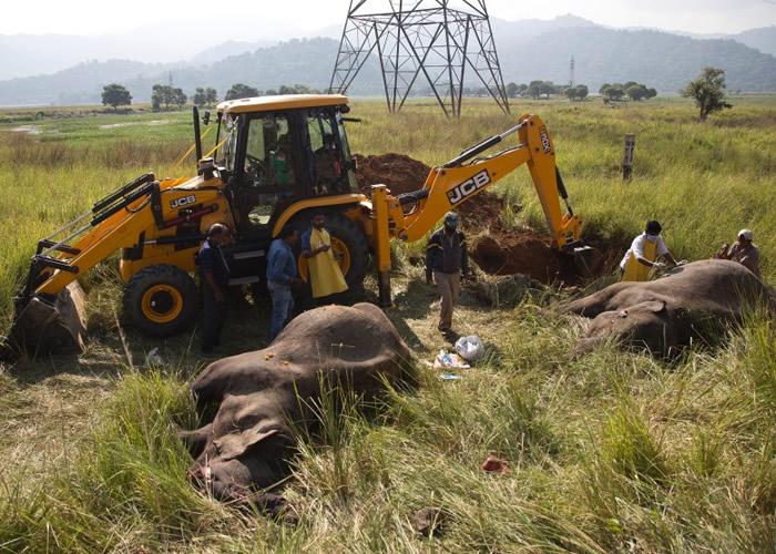 大象遗体埋葬于路轨旁边。