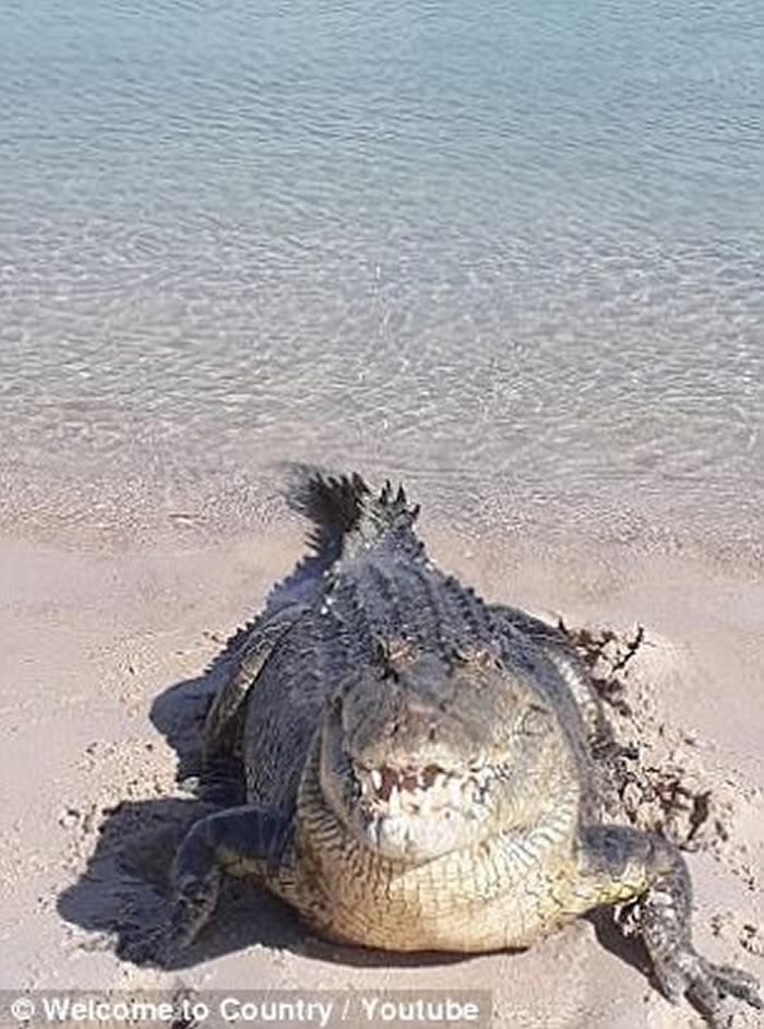 澳洲雍古族土著把鳄鱼当宠物 专家斥不要幼稚自找麻烦