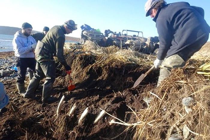 专家花了多个小时才掘出遗骸。