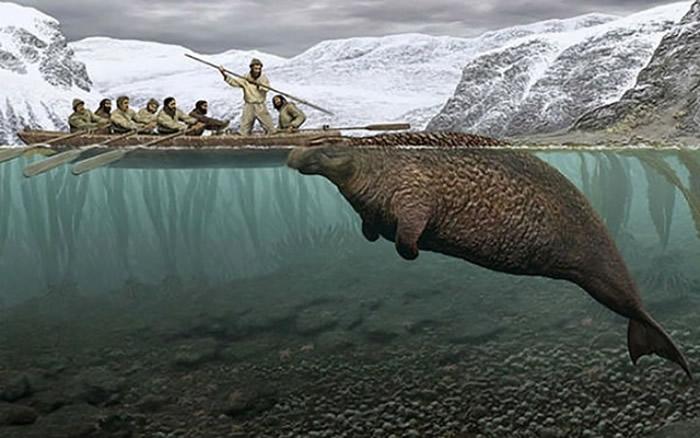 发现6米 海怪 遗骸 俄罗斯司令群岛出土已灭绝的斯特拉海牛图片