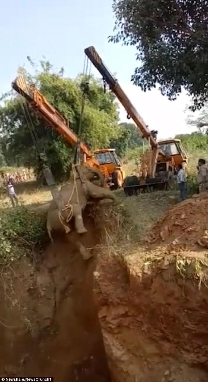 印度大象被村民追赶堕6米深坑 困36小时始获救