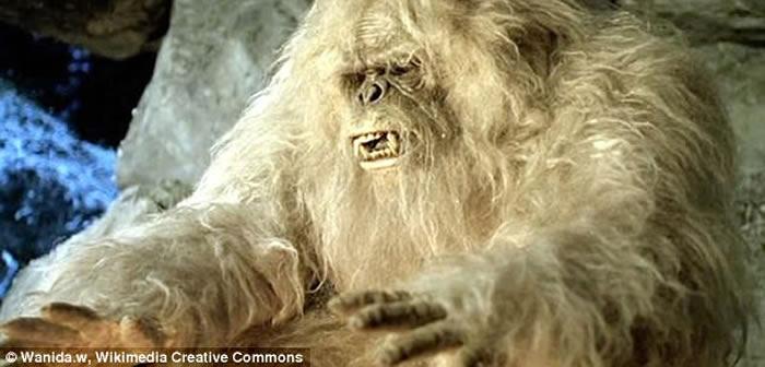 美国研究人员从搜集样本中分析指出喜马拉雅山雪人可能是熊类