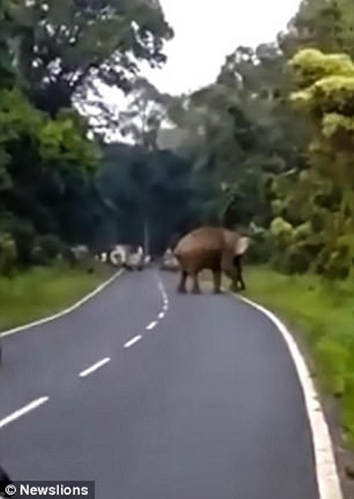 印度男子上班途中偶