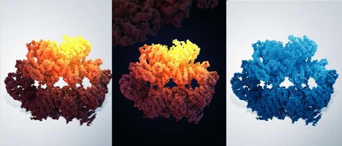 """科学家以""""近原子分辨率""""描绘基因组稳定性维持关键组分的结构"""