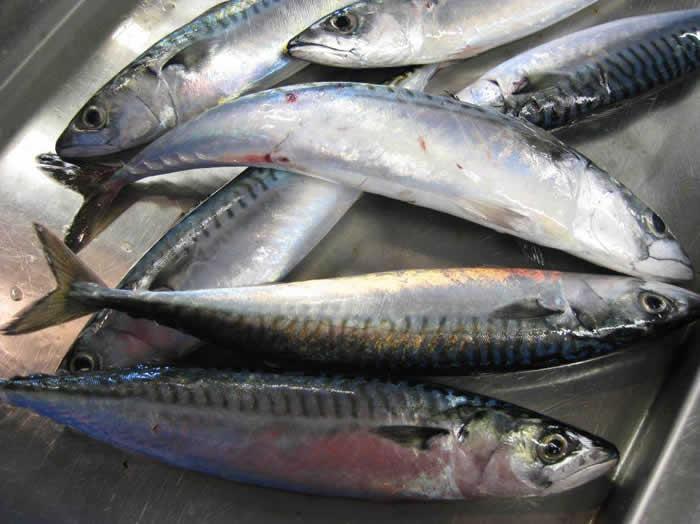 全球主要捕鱼国同意暂停北冰洋公海海域的商业渔业 合作科学研究项目