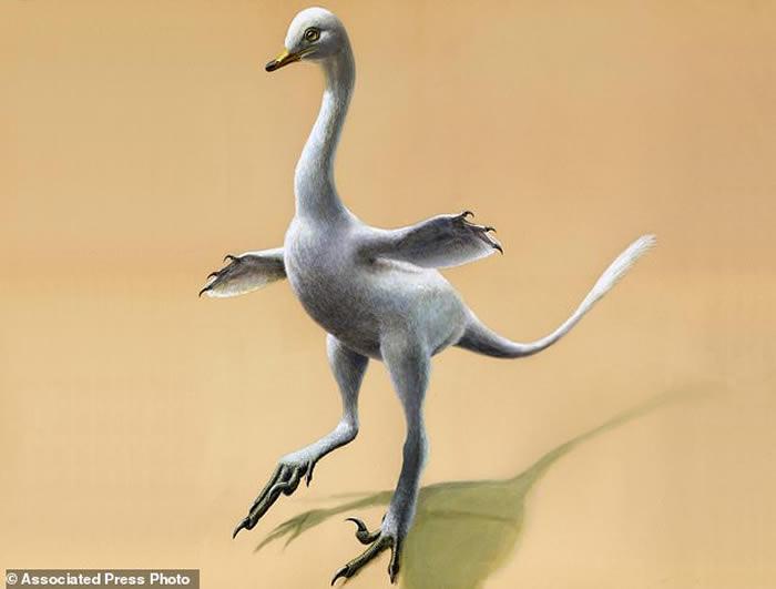 生活在水中似天鹅!蒙古发现白垩纪恐龙新物种——埃氏哈兹卡盗龙