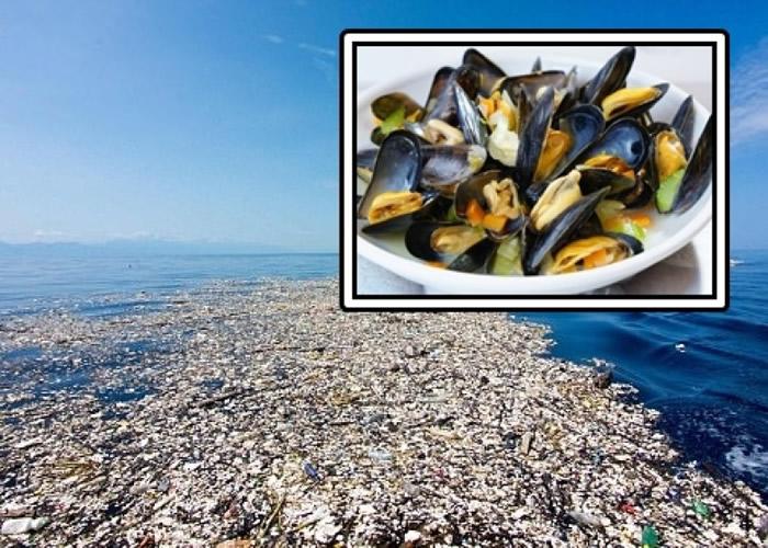海洋污染愈趋严重,研究指甲壳类动物较易摄取塑胶,人类食用后会间接吞下胶粒。