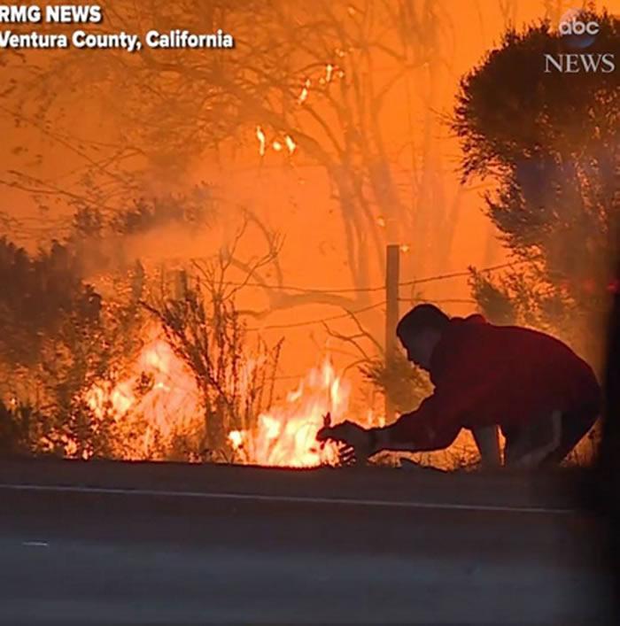 美国南加州大火:19岁少年冲向熊熊大火救出兔子宝宝