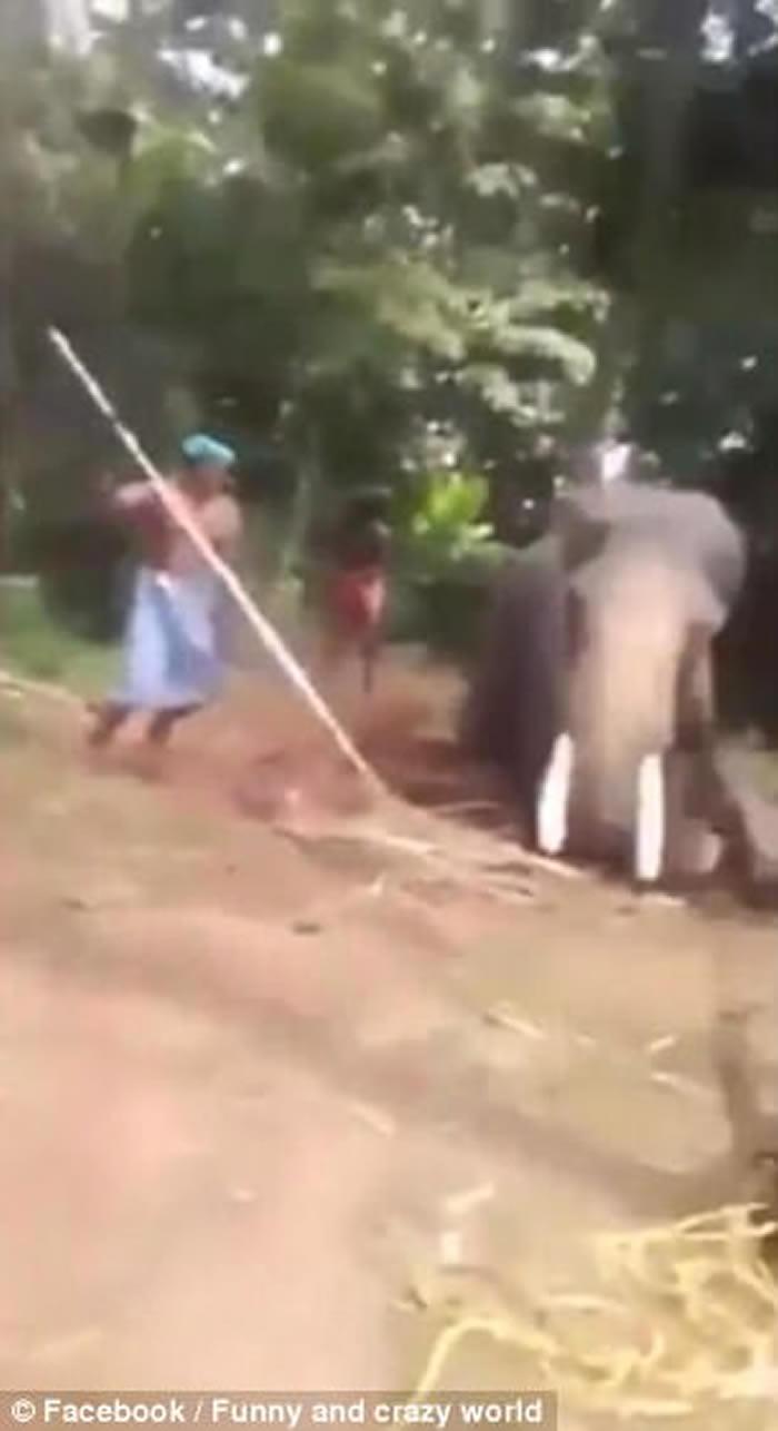 印度无良业界虐大象 活生生打断腿