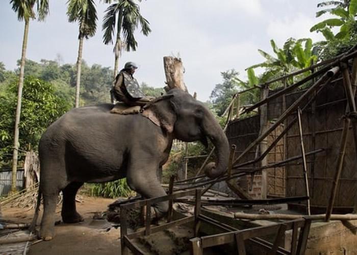 警员骑乘大象清拆房屋。