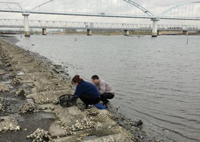 江户川河边有民众采蚝。