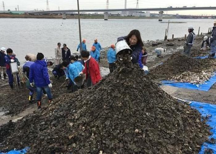 河边堆积大量蚝壳。