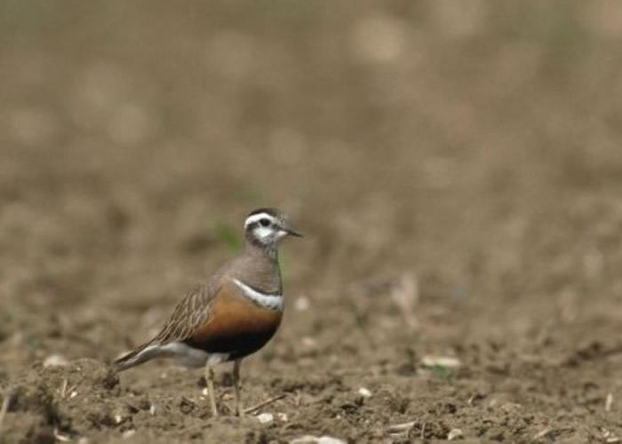 报告指气候转变威胁部分雀鸟的生存。