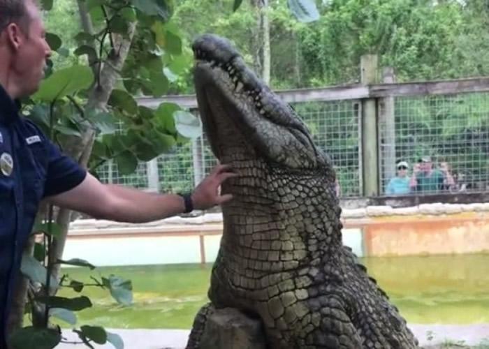 美国佛罗里达州鳄鱼主题公园尼罗鳄搔痒超放松 温驯可爱似小狗