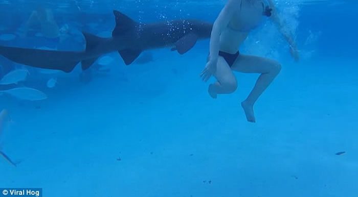 美国比基尼美眉到加勒比海巴哈马群岛度蜜月遭护士鲨攻击