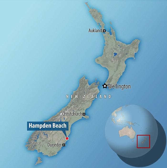 新西兰发现6000万年前巨型企鹅化石 和人类差不多高度