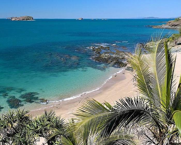 澳洲昆士兰耶蓬海滩发现神秘海洋生物尸体