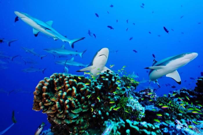 联合国将启动公海保