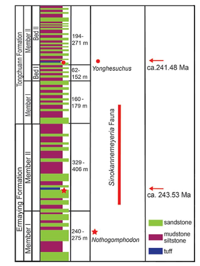 三叠纪高精度锆石测年新进展——中国肯氏兽动物群的时代以及中国陆相中三叠统的底界