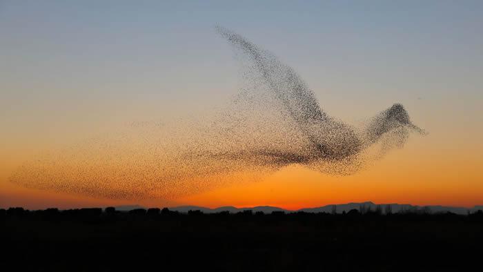 德国摄影师到西班牙度假时意外拍到获金奖照片:椋鸟群飞排成巨鸟