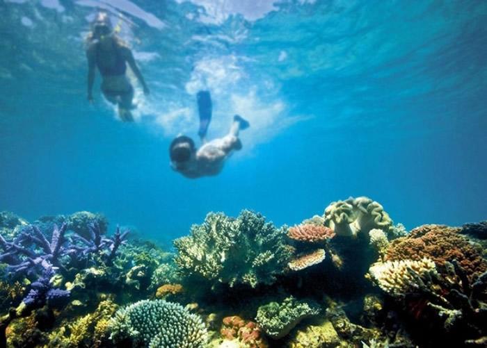 大堡礁的生态环境受到气候变化影响。