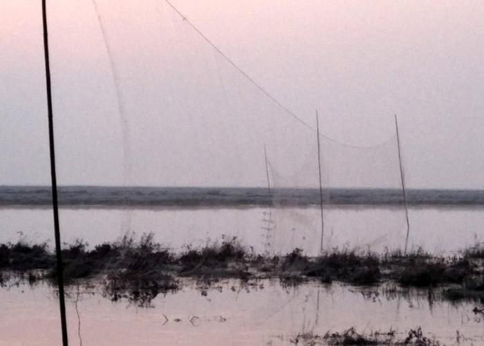 非法捕鸟网均长约60米,透明、网眼很大。