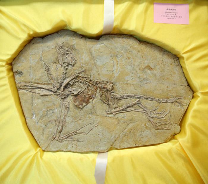 法国化石收藏家艾斯奎里向辽宁古生物博物馆赠送8件珍贵的中国流失古化物化石
