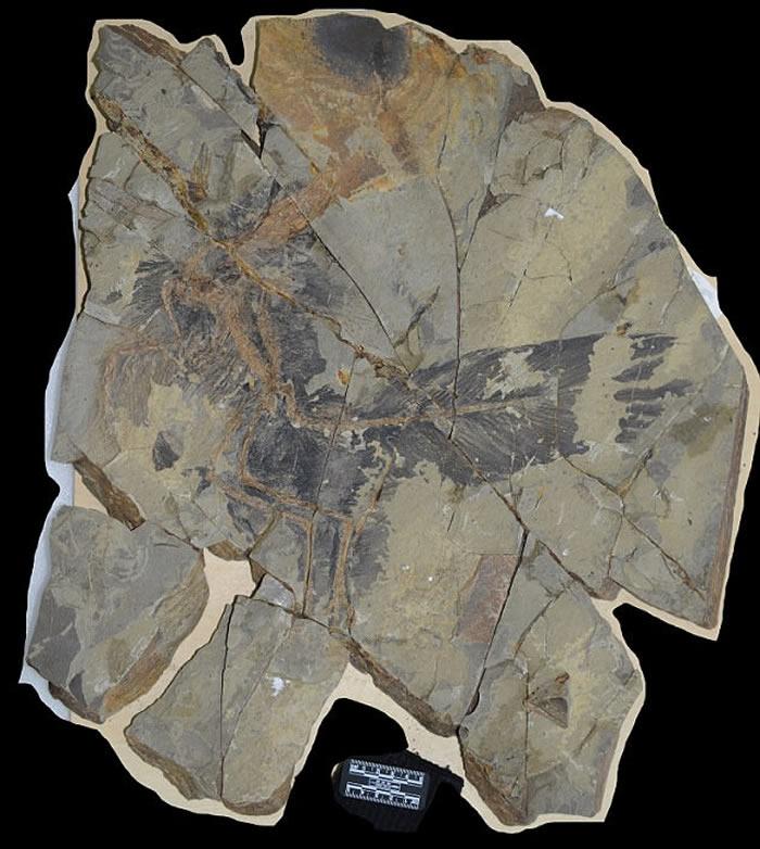 古生物学家发现1.61亿年前的彩虹恐龙