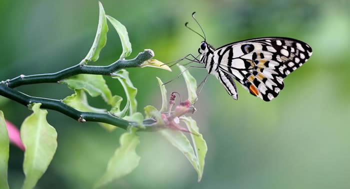 《科学进展》杂志:德国2亿年前化石证明蝴蝶出现的时间比开花植物要早得多