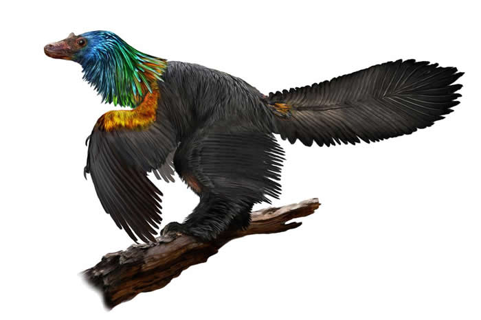 中国发现生活在1.61亿年前和鸟类亲缘关系很近的恐龙新属种——巨嵴彩虹龙