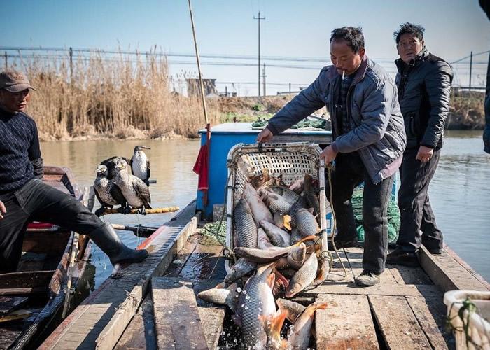 每日鱼获最多可达1500公斤。