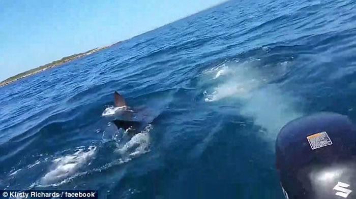 澳大利亚家庭出海钓鱼引来5米大白鲨