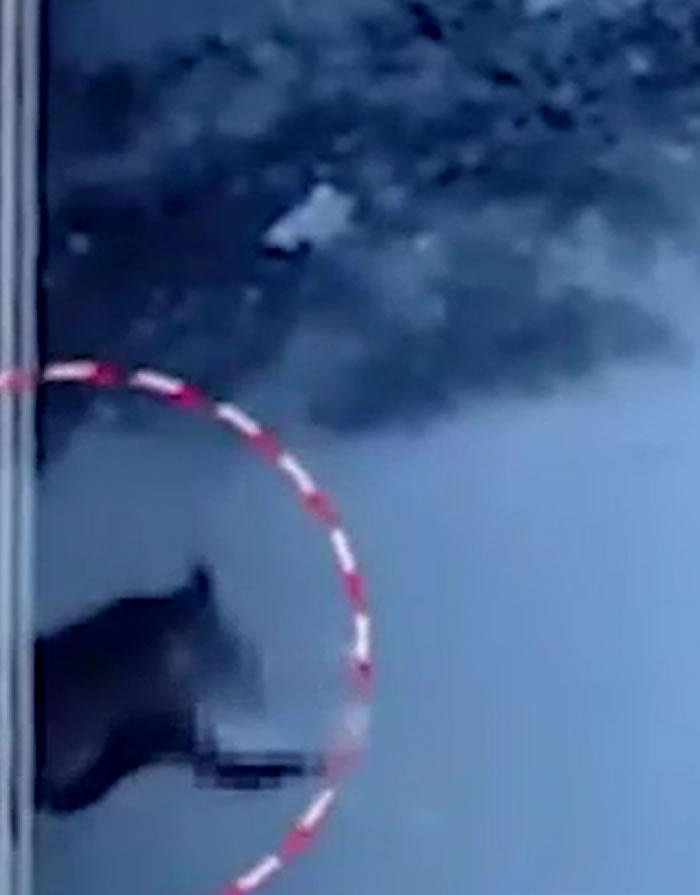 印度切蒂斯格尔邦14月大女婴爬到街上遭两流浪狗咬死