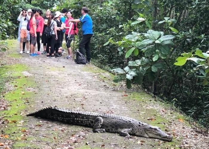新加坡双溪布洛湿地保护区公园惊现鳄鱼
