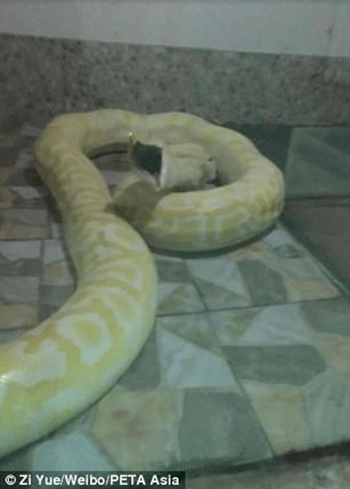 河南平顶山河滨公园动物园拿活狗喂养大蟒蛇