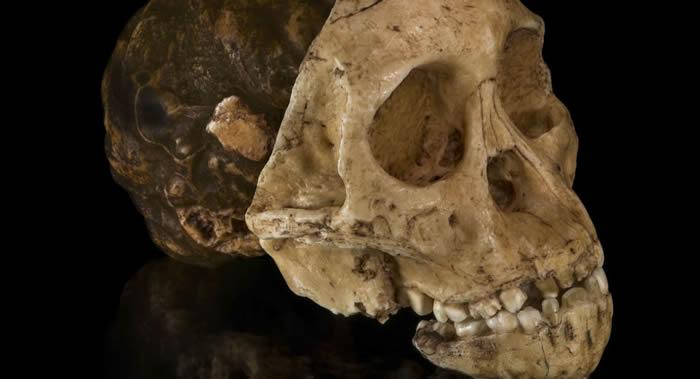 丹麦的西兰公国岛发现外星人头骨?