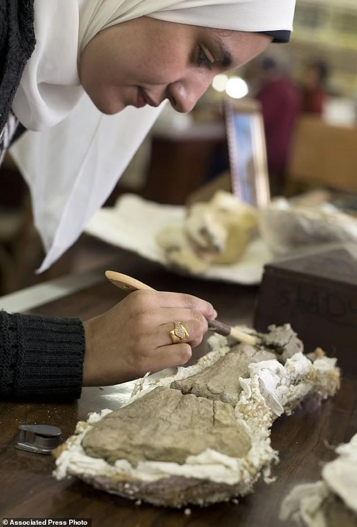 """埃及发现全新白垩纪恐龙化石——""""曼苏拉龙"""""""
