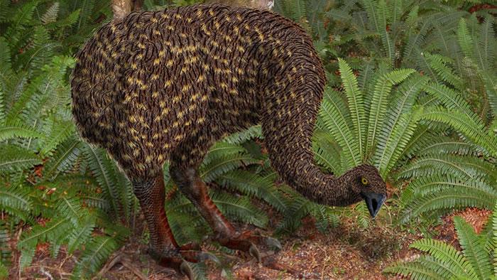 古老恐鸟可能通过吃蘑菇促进山毛榉繁衍。图片来源:Jamie Wood