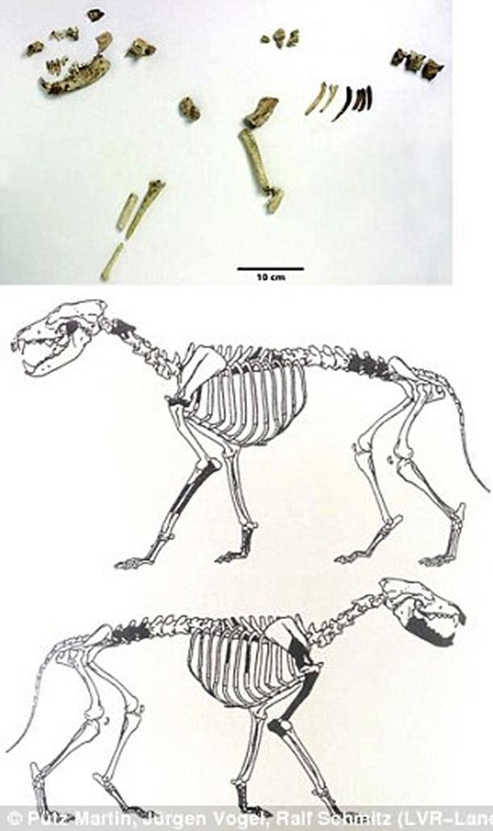人类与狗之间的关系在1.4万年前就存在