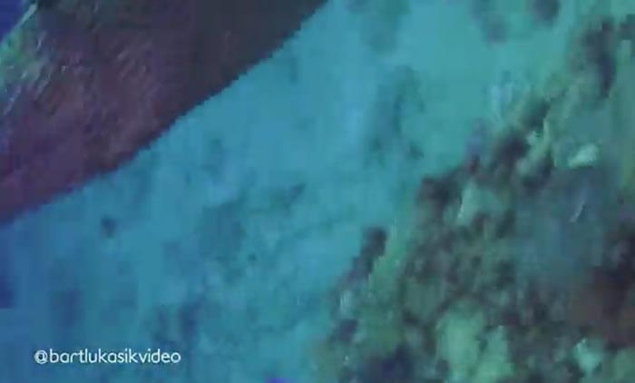 南非索德瓦纳湾波兰年轻人下潜观察珊瑚礁时被两只海鳝发怒袭击