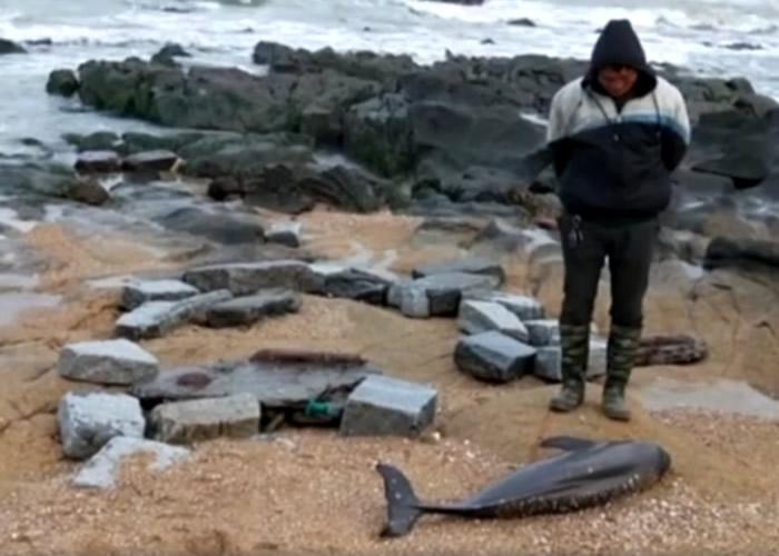 """有市民在小岞海滩上发现有""""水中大熊猫""""之称的江豚。"""