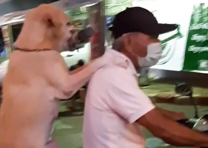 泰国狗狗口中咬着雨伞坐摩托车