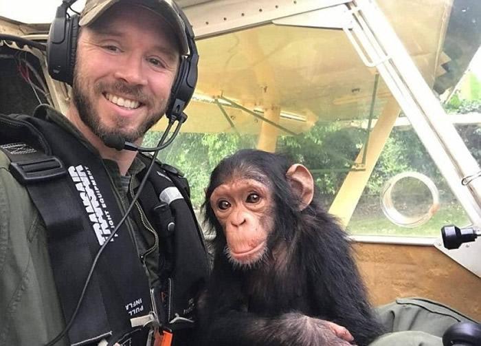 """刚果黑猩猩宝宝幸运脱险 不改好奇心""""学开飞机"""""""