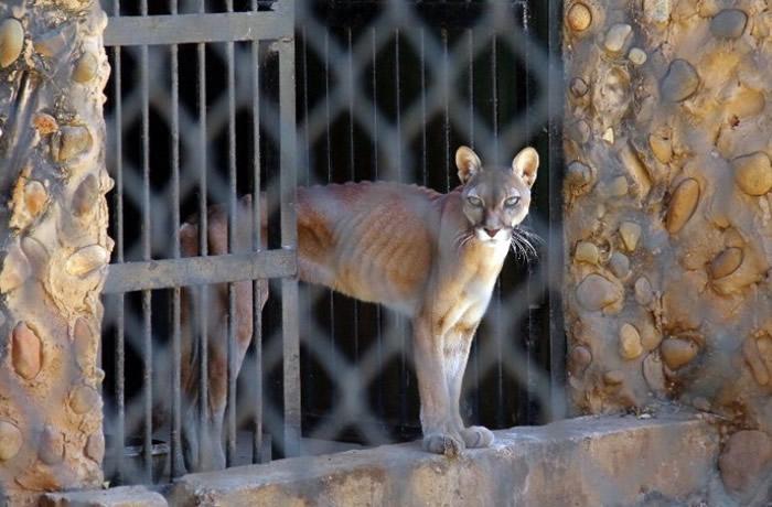 园内动物粮食严重不足。