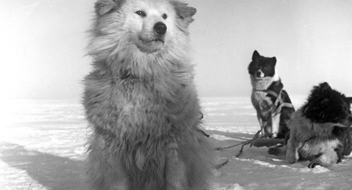 英国约克大学研究人员发现与狗交流的正确方法