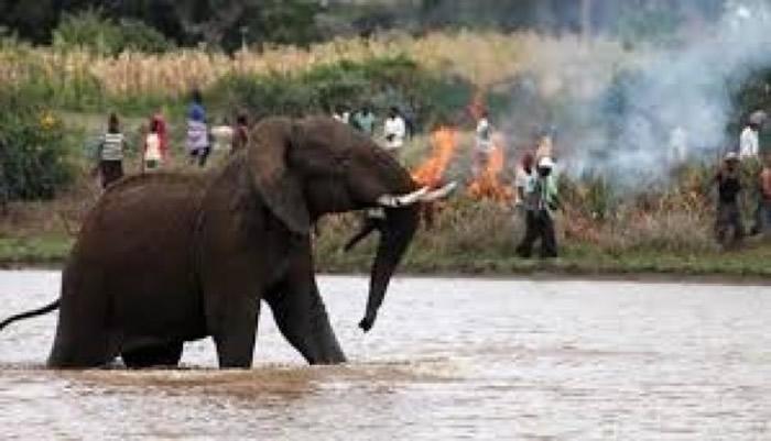 大象闯入难民营造成难民死亡。(资料图片)