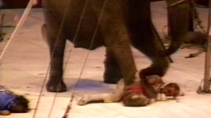 泰克用脚踩、鼻子重压马戏团人员。