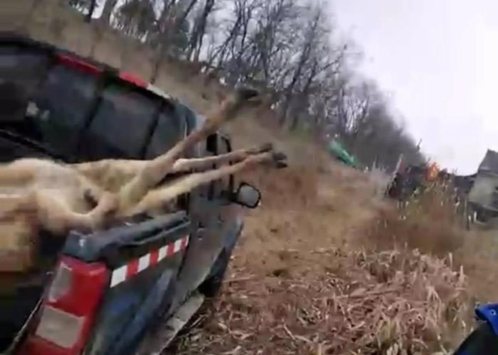 麋鹿因鹿角被尼龙网缠住,挣脱不得失血过多致死。
